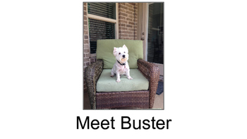 """Shared Reading with """"Meet Buster"""" (Level C and E versions"""