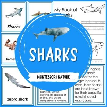 Sharks 3 - Part Cards and Description Cards