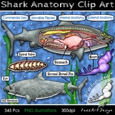 Shark Anatomy Dissection Clip Art & Diagrams | Movable Pie