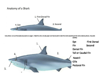 Shark Anatomy (Elementary Students) Reusable!