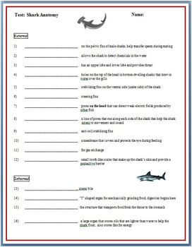 Shark Anatomy Worksheet & Test [Structures and Functions]