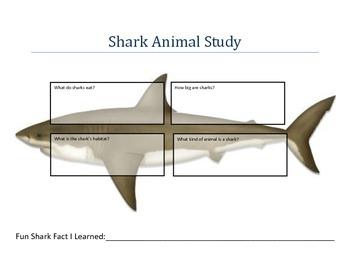 Shark Animal Study