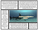 Shark Articles (Great White Shark, Tiger Shark, Hammerhead