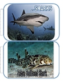 Shark Picture Book