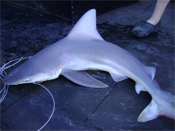 Shark Classification Lesson