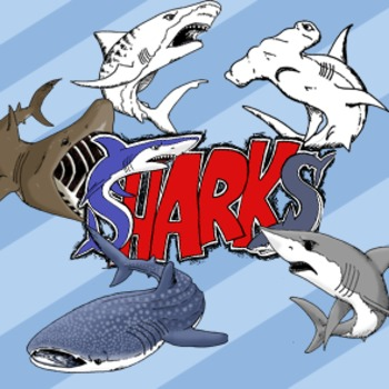 Shark Clip Art