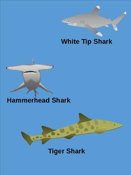 Shark Clip Art - Great White Shark, Mako Shark, Lemon Shark, Hammerhead Shark