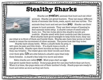 Shark Close Read