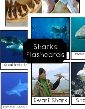 Shark Flashcards