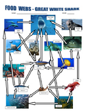 Shark Food Webs / Ocean Food Chains
