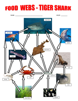 Shark Food Webs / Ocean Food Chains