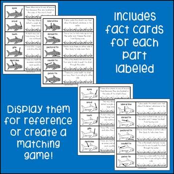 Shark Labeling Center