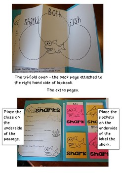 Interactive Shark Lapbook