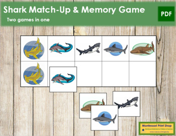 Shark Match-Up and Memory