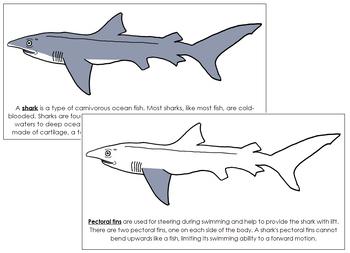 Shark Nomenclature Book