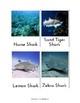 Shark Photo Cards