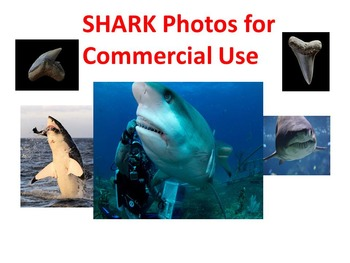 Shark Photos: Realistic Clip Art for Commercial Use