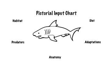 Shark Pictorial Input Chart