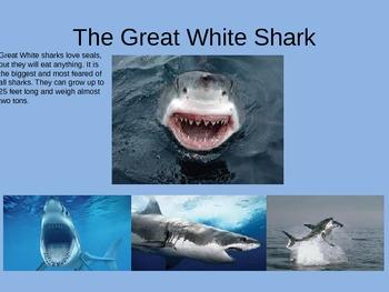 Shark Power Point