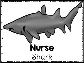 Shark Research for Kinder