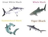 Shark Species Flash Cards