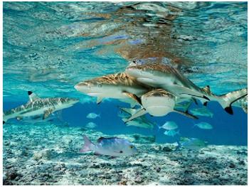 Shark Tank Project
