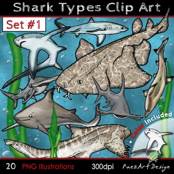Shark Types Clip Art: #ONE {PaezArtDesign}