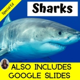 Shark Unit for Special Education