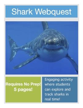 Shark Webquest