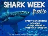 Shark Week Freebie: Great White Shark