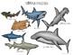Shark Week Speech
