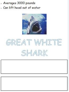 Shark Word Trace and Write