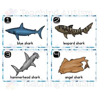 Shark Write the Room Shark Week