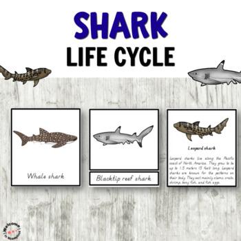 Shark life cycle printables