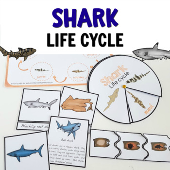 Shark life cycle printables