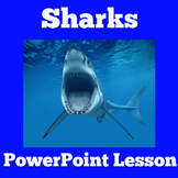 Sharks | All About Sharks | Science PowerPoint Activity |