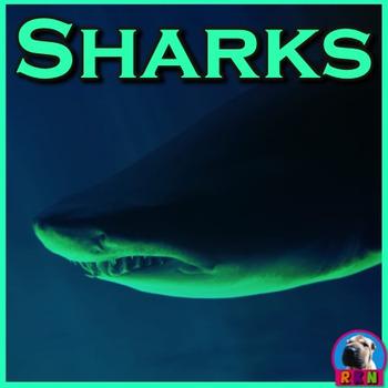 Sharks - PowerPoint & Activities