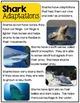Sharks- a nonfiction unit