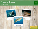 Sharks: 3-Part Cards