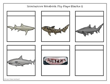 Sharks All About Sharks Interactive Research Activities