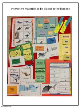 Sharks An Interactive Lapbook