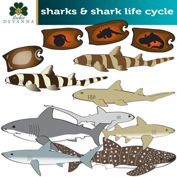 what is the life cycle of a whale shark
