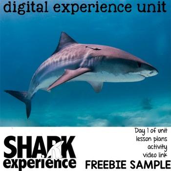 Sharks Freebie