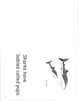 Sharks Have- a non-fiction guided reading book