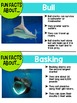 Sharks {Informational Text, Story & Poem}