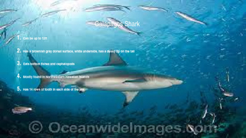 Sharks Introduction Powerpoint