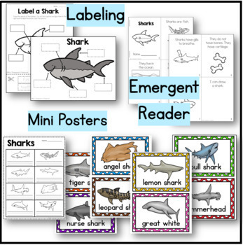 Sharks Kindergarten Science NGSS