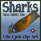 Sharks Life Cycle Clip Art