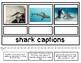 Sharks: Nonfiction Text Features