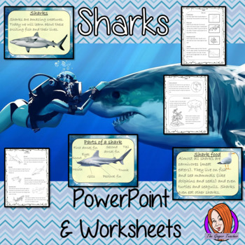 Sharks Lesson PowerPoint and Worksheets